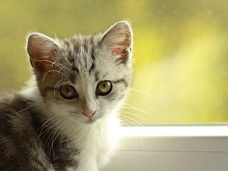 nomes-gatos-significados-lola