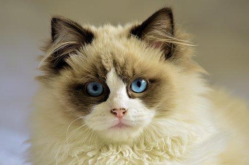 nomes-gatos-significados-max