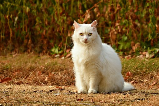 nomes-gatos-significados-milo
