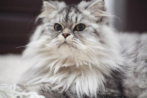nomes-gatos-significados-sophie