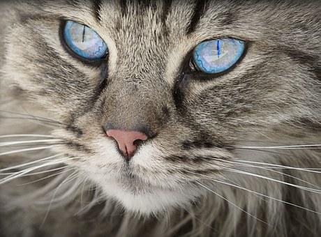 nomes-gatos-significados