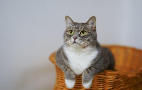 nomes japoneses para gatos, comidas, mitologicos, pretos, brancos, laranjas
