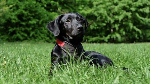 nomes para cadelas pretas, cachorras pretas