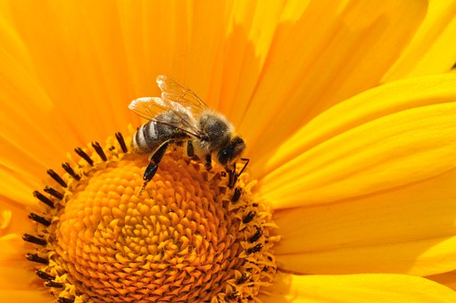 poesia-infantil-com-rimas-abelha
