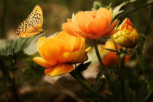 poesia-infantil-com-rimas-borboleta