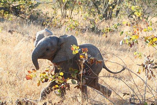 poesia-infantil-com-rimas-elefantinho