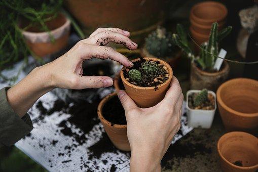surpresa-namorado-plantas